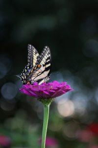"<img src=""butterfly.jpg"" alt=""mindfulness meditation ptsd therapy"""