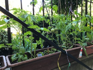 urban garden, urban jungle container gardening