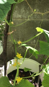 urban garden, urban jungle container gardening